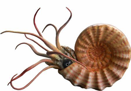 molluscs and other marine invertebrates monte san giorgio